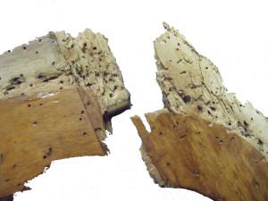 meubel vraatschade restauratie houtworm